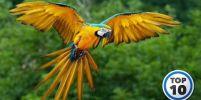 10อันดับ นกแก้วที่สีสวยที่สุดในโลก [10อันดับ วิดีโอ]