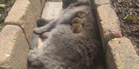 เมื่อแมวมุ้งมิ้ง เปลี่ยนใจให้กระรอกเป็นเพื่อน