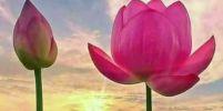 ความสงบ...นำมาซึ่งความผาสุกใจ
