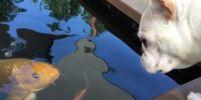 น่ารักไปอีกแบบ เมื่อสุนัขกับปลาเป็นเพื่อนรักกัน