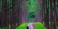 เที่ยวเมืองไทยเหมือนไปรอบโลกกับ 10 สถานที่ท่องเที่ยวธรรมชาติในไทย ...