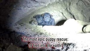 9 ชีวิตทีมหมาน้อยในโพรงถ้ำ !!!
