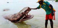 11 สัตว์ใหญ่น่ากลัวที่ยังมีชีวิตอยู่ในปัจจุบัน!!!