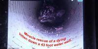 ปฏิบัติการช่วยชีวิตลูกแมว ติดในท่อกว้างเพียง 4 นิ้ว ลึกกว่า 43 ฟุต ใช้เวลาถึง 5 วัน !!!