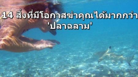 รู้หรือไม่? อย่ากลัวตายเพราะ 'ฉลาม' เพราะนี่คือ 14 สิ่งที่มีโอกาสฆ่าคุณได้มากกว่าหลายเท่า