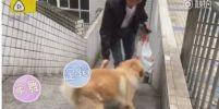 แชร์สะพัดในโลกออนไลน์จีนทะลุ 10 ล้านวิวชื่นชมสุนัขยอดกตัญญูส่งเจ้านายแล้วรอ12 ชม.เพื่อรับกลับ