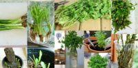 เทคนิคดีๆ ปลูกพืชผักเหลือใช้ ได้ผักใหม่ใกล้ครัวทุกวัน