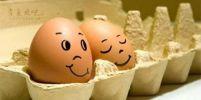รู้อย่างนี้...กินไข่ตอนเช้าทุกวันตั้งนานแล้ว!!??