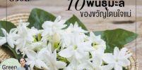 รู้จักไหม?  ดอกมะลิ 10 สายพันธ์ ของขวัญโดนใจวันแม่!!!!