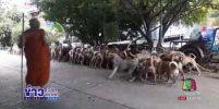 ยกนิ้วให้ หมาวัด 200 ตัว เชื่อฟังคำสั่ง เป็นระเบียบเรียบร้อย