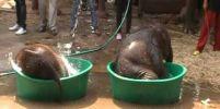 ช้างน้อยเล่นน้ำ...เหมือนเด็ก