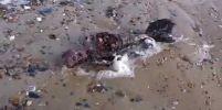 """พบซากประหลาดคล้ายคนมีหางเหมือนปลาเกยตื้นชายหาดอังกฤษ คนเจออ้างเป็นศพ """"นางเงือก""""!! (ชมคลิป)"""