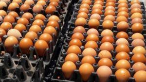 กระทรวงพาณิชย์ ออกประกาศห้ามส่งออกไข่ไก่ เป็นเวลา 7 วัน