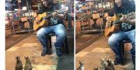 4ลูกแมวตั้งใจฟังเพลง ที่เล่นโดยนักดนตรีบนถนน