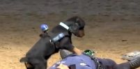 เจ้าตูบแสนรู้  โชว์สกิลทำ CPR  หลังตำรวจคู่หูแกล้งตาย
