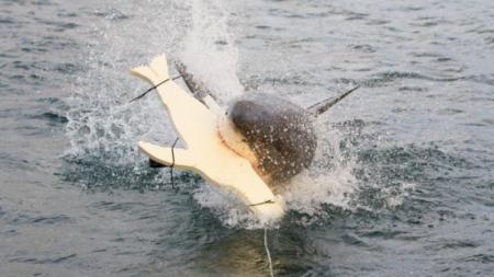 """เทคโนโลยีป้องกัน """"ฉลาม"""" ทำร้าย ในออสเตรเลีย"""
