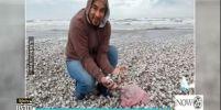 หอยแครงจักรพรรดิเกลื่อนหาด