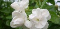 ดอกไม้บูชาพระ วันวิสาขบูชา
