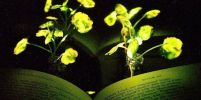 MIT วิจัยและคิดค้นต้นไม้เรืองแสง แห่งอนาคตเพื่อใช้แทนแสงไฟส่องถนน