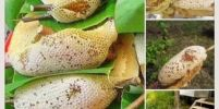 น้ำผึ้งทานอย่างไรถึงจะได้ผลดี ?