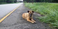 พบแล้วนะ! เจ้าของ น้องหมา ที่นั่งรอริมถนนนานนับปี รอรับกลับบ้าน