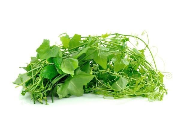 'ตำลึง' สุดยอดผักมากคุณประโยชน์ ช่วยบรรเทาปวดหัวข้างเดียว