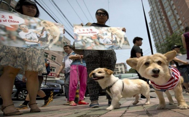 กลุ่มนักสิทธิสัตว์สหรัฐเปิดเผยว่า ทางการเมืองอวี้หลินของจีนยกเลิกเทศกาลรับประทานเนื้อสุนัข