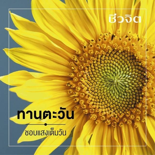 ๑๐ พรรณไม้สีเหลือง...รำลึกถึงในหลวงรัชกาลที่๙