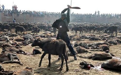 ศีลข้อที่1ปาณาติปาตา/การฆ่าสัตว์และผลกรรมแห่งการฆ่าสัตว์ จะมีวิบากเป็นอย่างไร ?