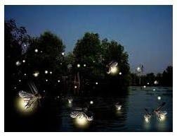 เสน่ห์เมืองไทย ล่องเรือชมหิ่งห้อยที่อัมพวา สถานที่ที่ไม่ควรพลาด!!