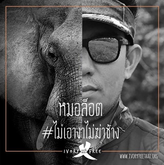 ศิลปินดารา คนดังของไทยแสดงพลัง #ไม่เอางาไม่ฆ่าช้าง ชวนคนไทยเลิกใช้ผลิตภัณฑ์งาช้าง