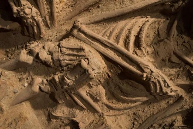 นักวิทยาศาสตร์ค้นพบกะโหลกมนุษย์อายุกว่า 300,000 ปีที่นับได้ว่าเก่าแก่ที่สุดเท่าที่เคยค้นพบมา