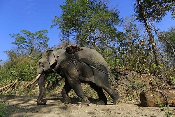 """"""" ใครรู้บ้าง ว่าทำไมเสือถึงมีลาย ช้างทำไมตาเล็ก"""""""