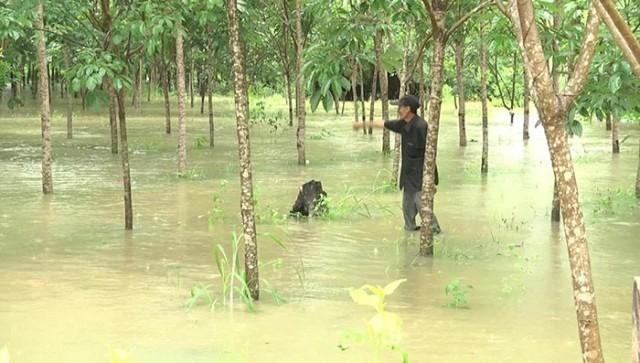 ครม.อนุมัติแล้ว ! ช่วยเหลือเกษตรกรที่ได้รับผลกระทบจากน้ำท่วม