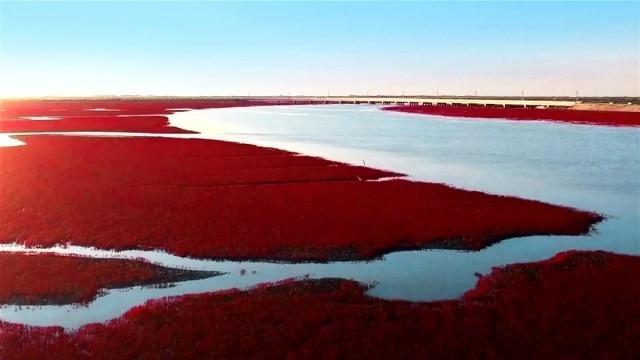 นทท.จีนแห่ชม'ทะเลสีเลือด'ที่มีเอกลักษณ์เฉพาะตัว และหาชมไม่ได้จากที่ใดในโลก