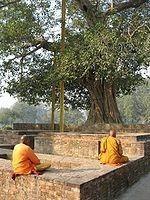 8 ต้นไม้สำคัญที่ชาวพุทธควรรู้จัก