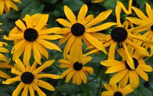 """จัดอันดับ 10 ดอกไม้ที่ขึ้นชื่อว่า """"สวยงามที่สุดในโลก"""""""