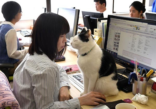 เผยผลการวิจัย! นำสัตว์เลี้ยงไปทำงานด้วย ลดตึงเครียดเพิ่มประสิทธิภาพการทำงานได้ จริงหรือ !!!