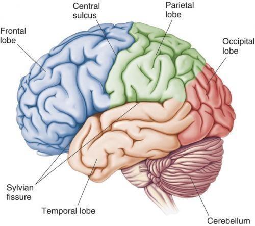 หยุดคิดเกิดปัญญา เจริญภาวนาส่งผลถึงเซลล์สมอง !?!
