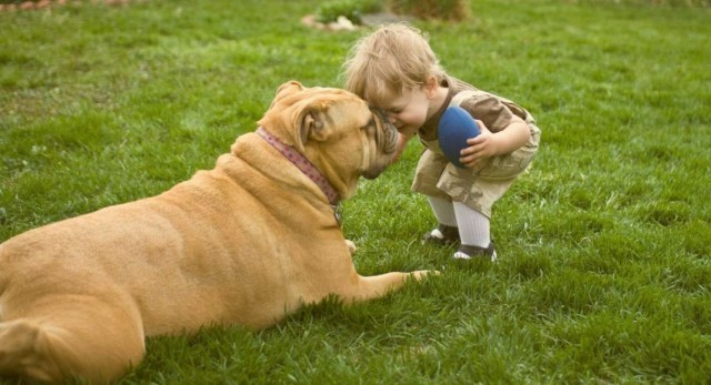 นักวิทย์คอนเฟิร์ม การเลี้ยงลูกสุนัขช่วยลดความเสี่ยงในการป่วยเป็นโรคต่าง ๆ ของลูกท่านได้!?