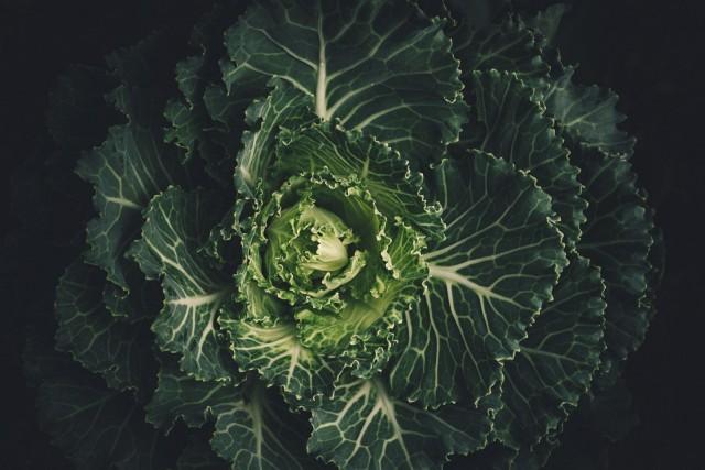 มายาคติเกี่ยวกับอาหาร VS หลักการทางวิทยาศาสตร์