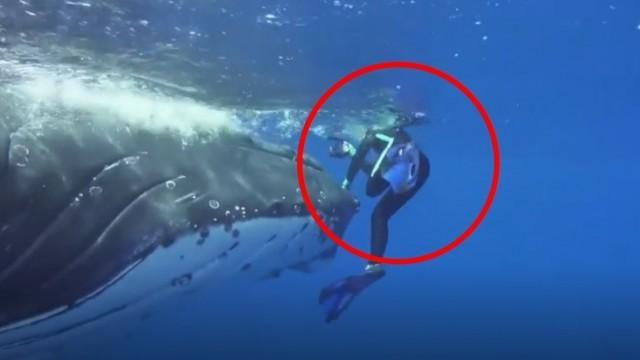 นักวิทย์ฯ เปิดใจ วาฬยักษ์ช่วยชีวิต !?!