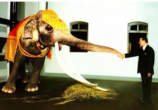 """"""" ในหลวง"""" ทรงเลี้ยง ลูกช้างเล็กๆ และ ทรงรับเลี้ยงสุนัขที่เป็นเพื่อนรักของลูกช้าง นี้คือสิ่งที่พวกเขาตอบแทน"""