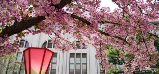 ดอกซากุระเริ่มบานแล้ว!!!ยลโฉมซากุระบาน 12 แห่งเมื่อไปเที่ยวญี่ปุ่น