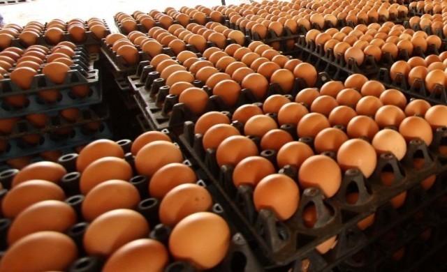 เหตุหวัดนก!!! เกาหลีใต้นำเข้าไข่ไก่จากไทย หลังขาดแคลนหนัก