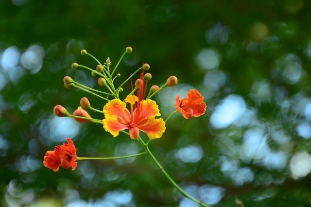 ม.ธรรมศาสตร์ เชิญชวนปชช.ร่วมประดิษฐ์ดอกไม้จันทน์ รูปแบบดอกยูงทอง ที่งดงามเสมือนจริง
