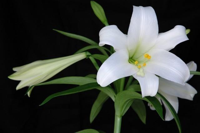 ดอกไม้บูชาพระ แต่ละชนิดมีความหมาย