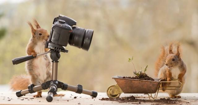 ชายหนุ่มใช้เวลา 4 ปี ตามถ่ายรูปฝูงกระรอก กลายเป็นซี้กันจนกระรอกถ่ายรูปคืนให้ หะ!?