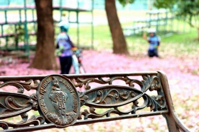 """ชวนชมและพักผ่อนหย่อนใจกับ """"ชมพูพันธุ์ทิพย์"""" บานสะพรั่ง 3 สวนอุทยานจตุจักร กทม."""