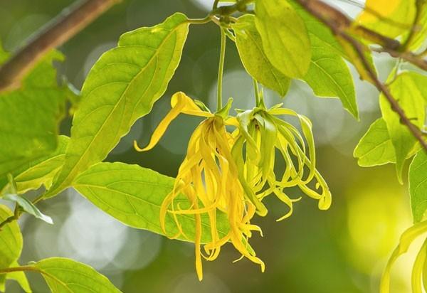 ดอกไม้ 10 ชนิด ส่งกลิ่นหอมฟุ้งตลอดทั้งวันให้ร่มเงาด้วย